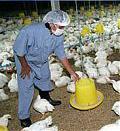 haarlemerol-vogelgrippe